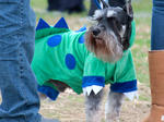 Barktoberfest 2012
